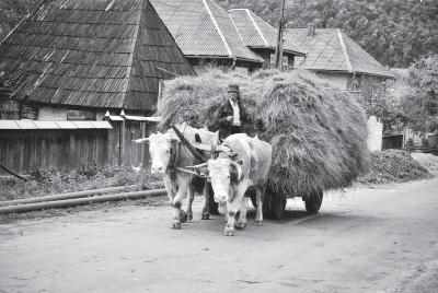 vocea-satului