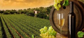 viticultură productie vin
